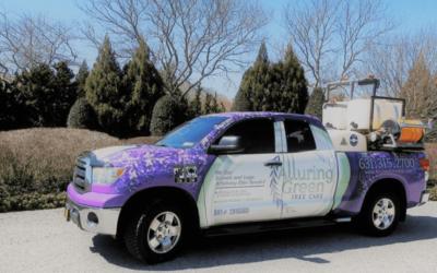 Alluring Green Tree Care